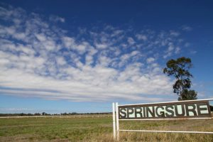Springsure QLD